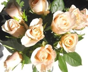 Rose02_2
