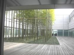 Bambou_1
