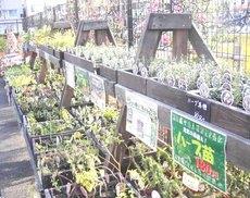 Herb_plant