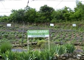 Nard_1