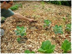 Plantingdouglas_1