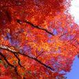 高野山の秋1