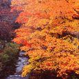 高野山の秋 2