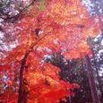 高野山の秋3