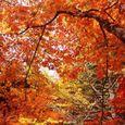 高野山の秋4