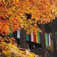 Kyoto2007